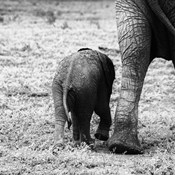Mama and Baby Elephant II