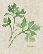 Italian Parsley v2 on Burlap