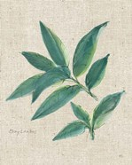 Bay Leaf on Burlap