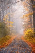 Road and Autumn Mist
