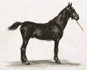 Horse Study 3