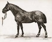 Horse Study 4