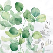 Eucalyptus Leaves II
