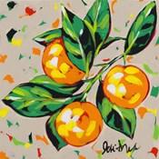 Fruit Sketch Oranges
