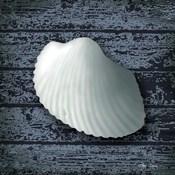 Seashore Shells Navy I