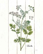 Cottage Herbs III