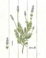 Cottage Herbs II