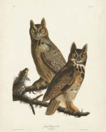 Pl 61 Great Horned Owl