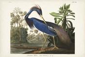 Pl 217 Louisiana Heron