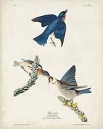 Pl 113 Blue Bird