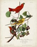 Pl 44 Summer Red Bird