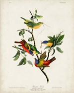 Pl 53 Painted Finch