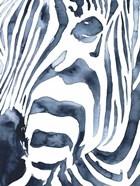 Indigo Zebra II