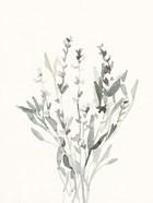 Delicate Sage Botanical V