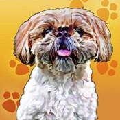 Pop Dog VIII