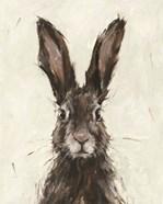 European Hare I