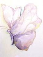 Dulzura Mariposa I
