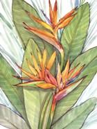 Tropical Botanical Paradise I
