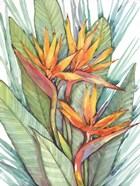 Tropical Botanical Paradise II