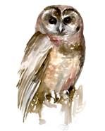 Watercolor Owl II