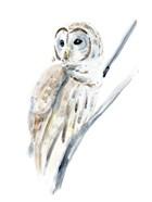Arctic Owl I