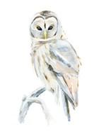 Arctic Owl II