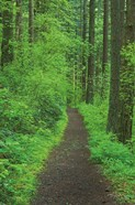 Hiking Trail in Columbia River Gorge II