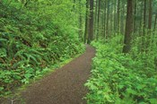 Hiking Trail in Columbia River Gorge I