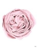 Powder Rose