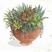 Terracotta Succulents II