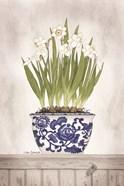 Blue and White Daffodils II