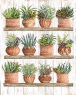 Succulents on Shelves