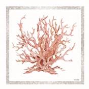 Pink Coastal Coral I