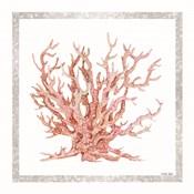 Pink Coastal Coral II
