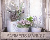 Farmer's Lavender