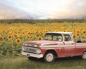 Truck with Sunflowers
