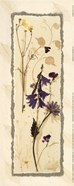 Dried Flowers IV