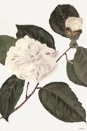 White Botanical I