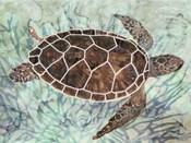 Sea Turtle Collage 1
