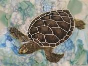 Sea Turtle Collage 2