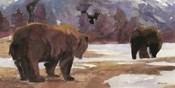 Montana Bears