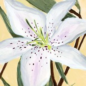 White Lily II