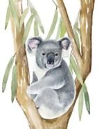 Woodland Koala I