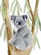 Woodland Koala II
