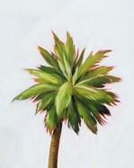 Palm Glow II