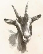 Sketched Farm Portraits II