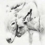 Donkey Portrait III