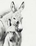 Donkey Portrait V