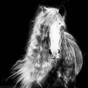 Black and White Horse Portrait I