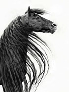 Black and White Horse Portrait II